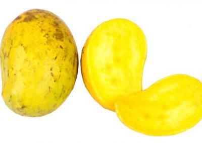 Mango TJC