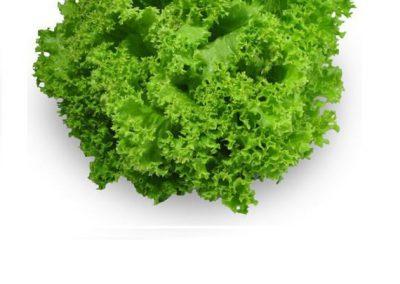 coral-lettuce
